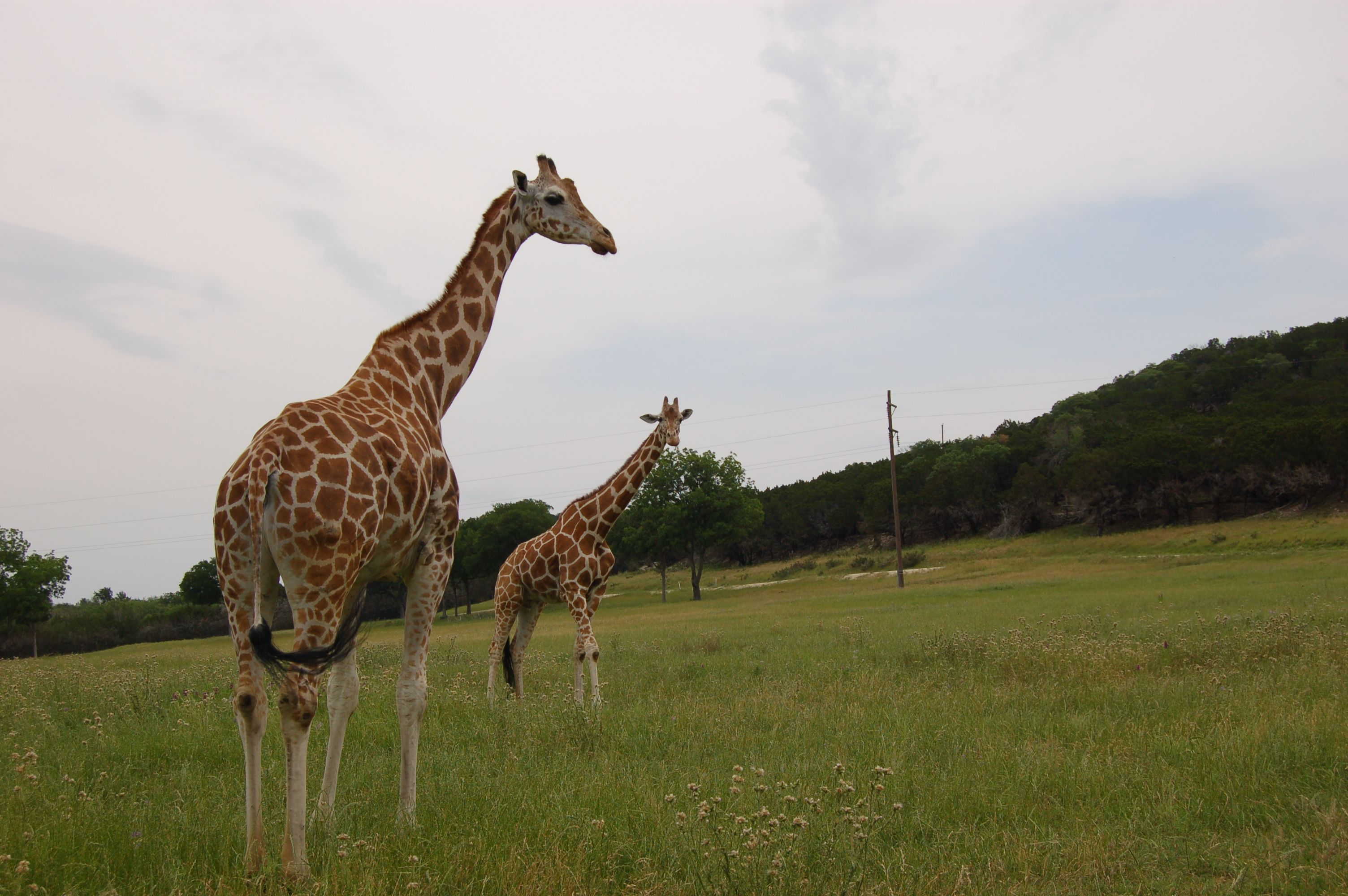DailyBuzz Moms 9X9: A Day in Africa