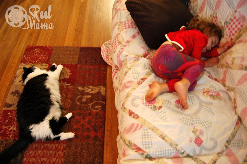 Cat nap: Wordless Wednesday