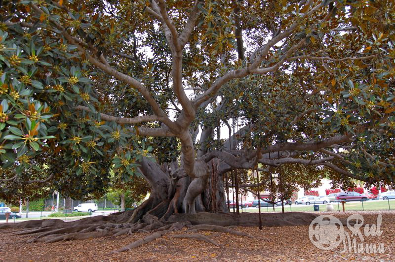 The most incredible trees you've ever seen ~ Not quite Wordless Wednesday