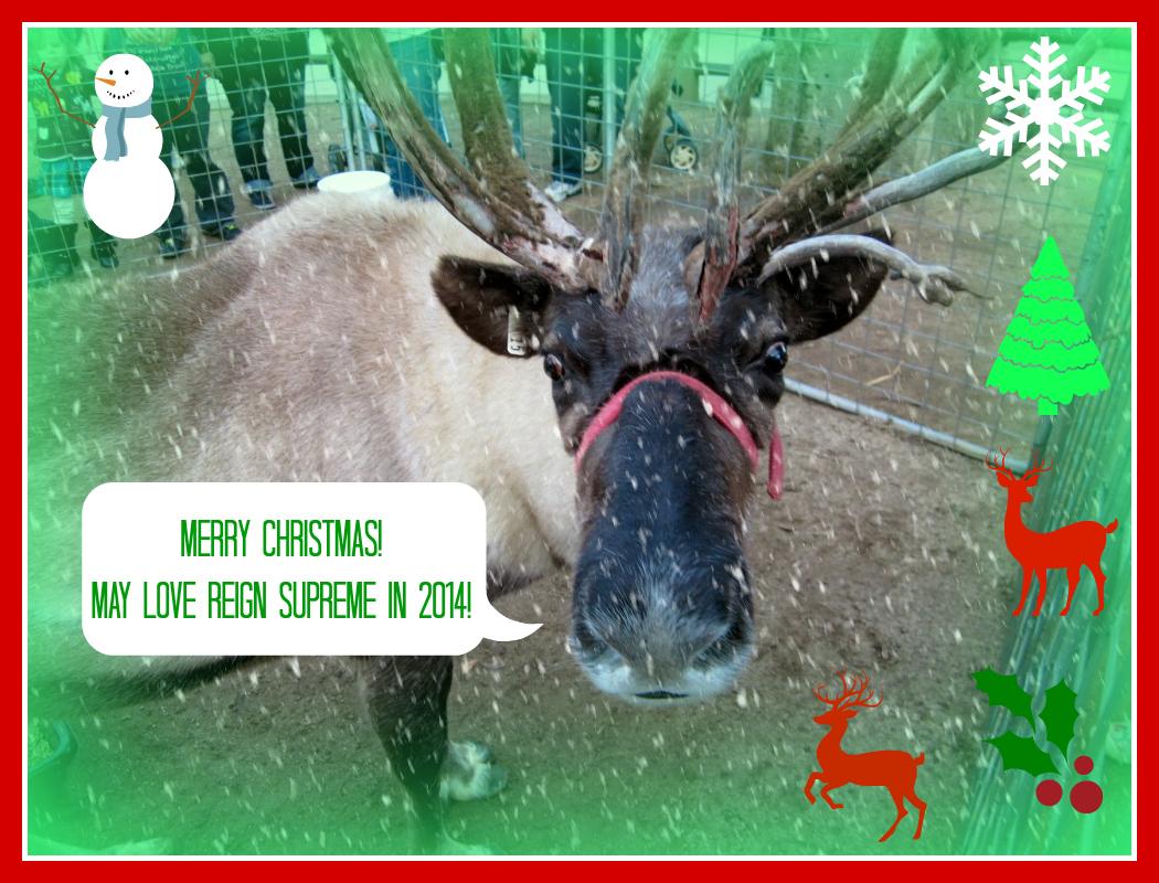 Merry Christmas and Seasons Greetings 2013