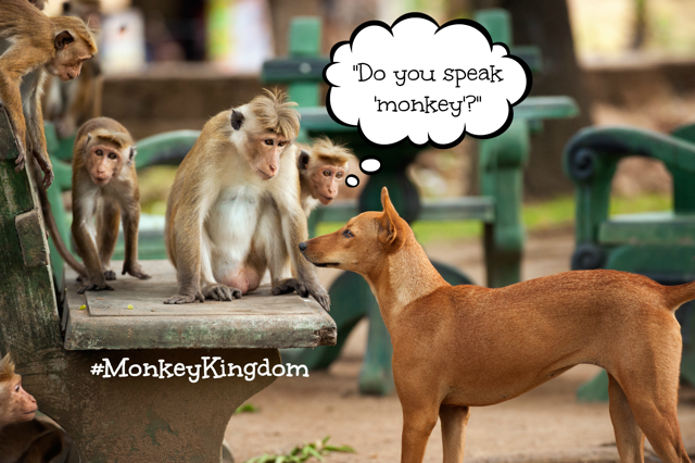 Do you speak monkey Monkey Kingdom 2