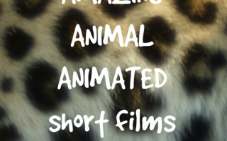 5 amazing animal short films for kids