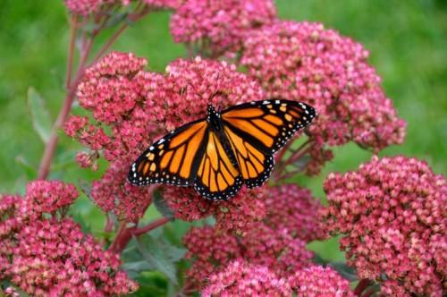 pictures of butterflies in flight slideshow